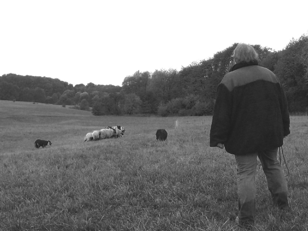 Anita Hermes /Hütetraining Ⓒ Hardi P.Schaarschmidt