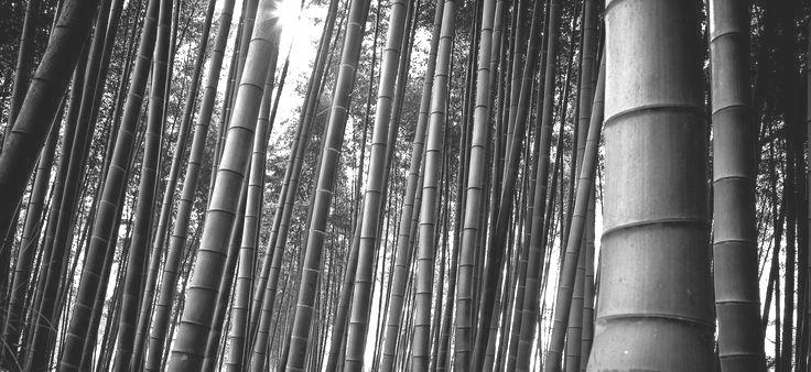 Bambuswald Ⓒ Steffen Reuter