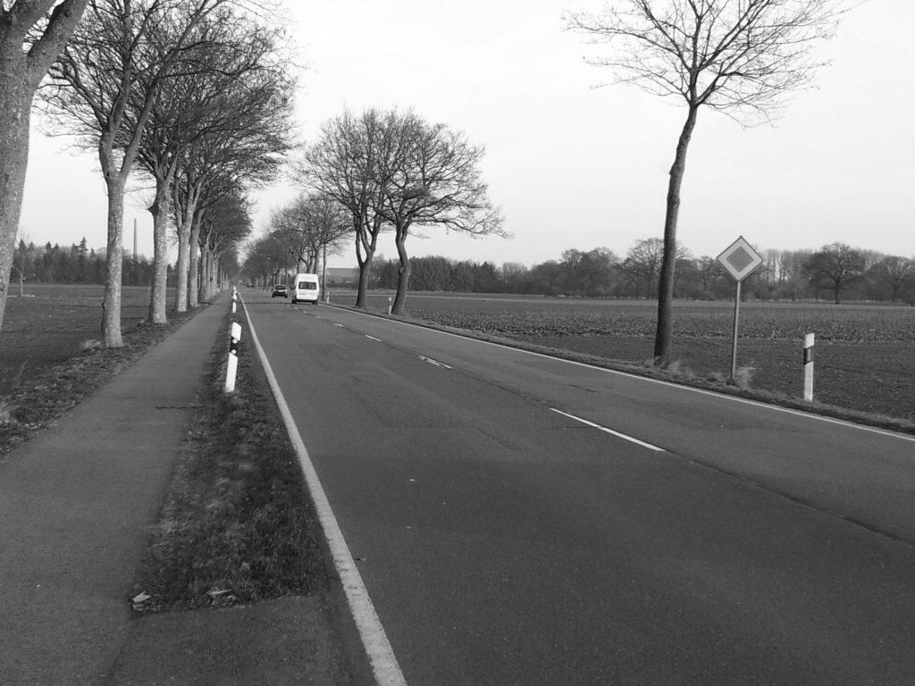 Der überfahrene Hund Ⓒ Hardi P.Schaarschmidt