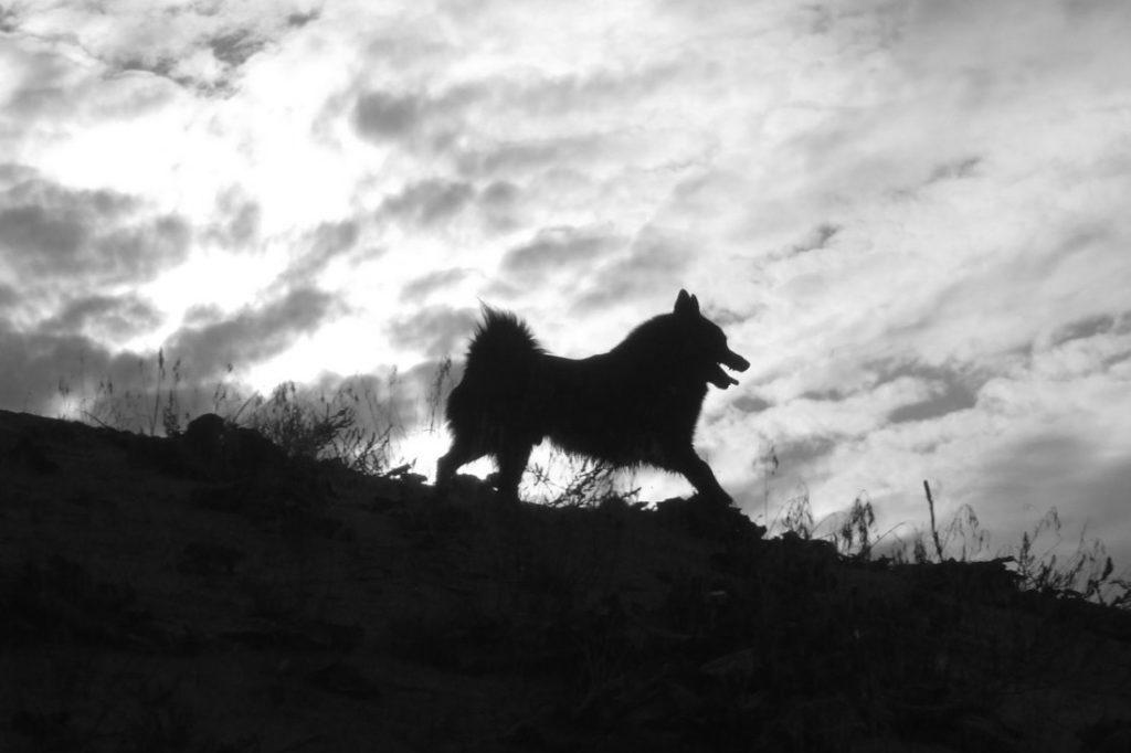 Der Geisterhund Ⓒ Steffen Reuter