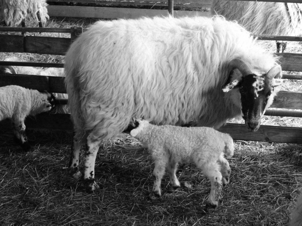 Eine kleine Familie Ⓒ Hardi P.Schaarschmidt