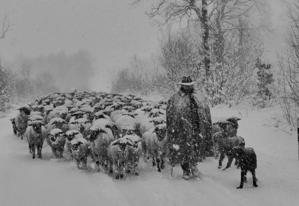 Wanderschäfer, die letzten Helden unserer Zeit Schaf-Land.de