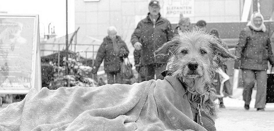 Die Hunde der Obdachlosen