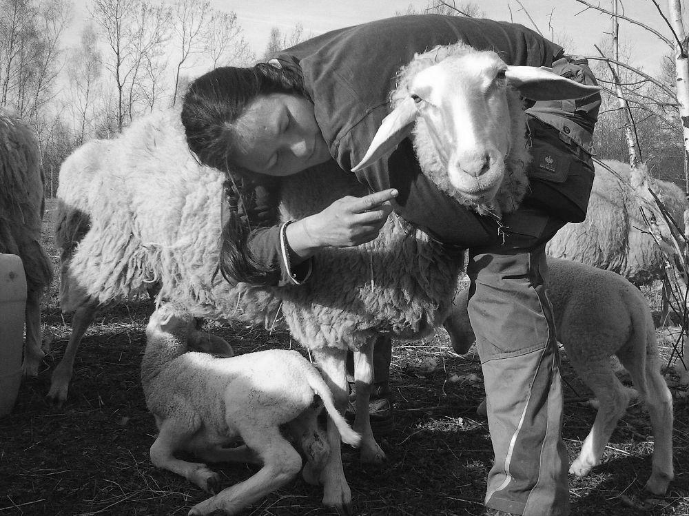 Helden für einen Tag - Schäfermeisterin Kerstin Doppelstein Schaf-Land