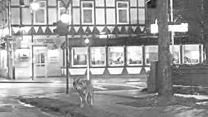 Der Wolf auf dem 20 Euroschein /Wölfe wohnen in der Stadt